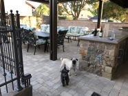 Turning this backyard into an outdoor entertainment room: Pergola, Pavers, Bar, Planters, Lights! (Glendale)