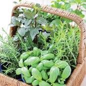 Italian herbs, rosemary and basil